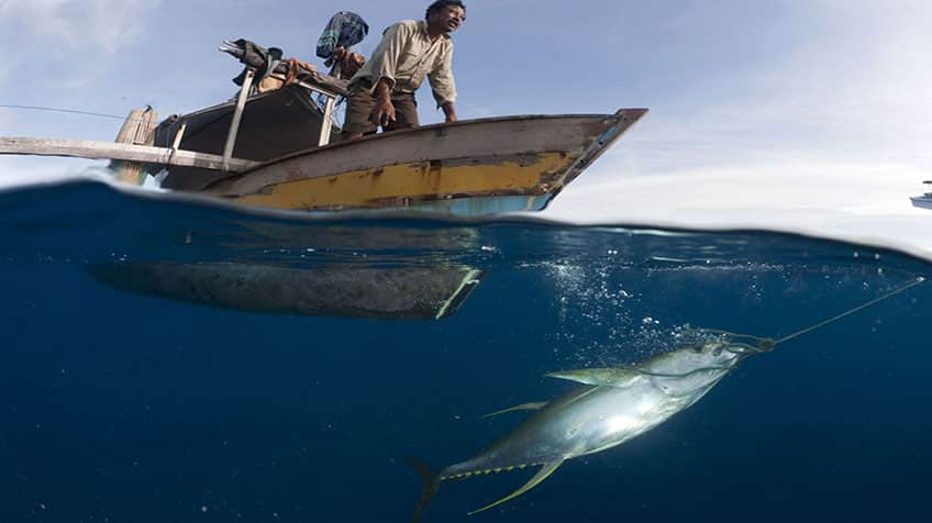 La humanitat pesca 32 milions de tones de peixos d'amagat