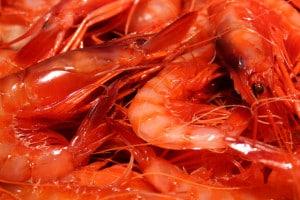 La confraria de pescadors de Palamós vol posar fi al frau de la gamba