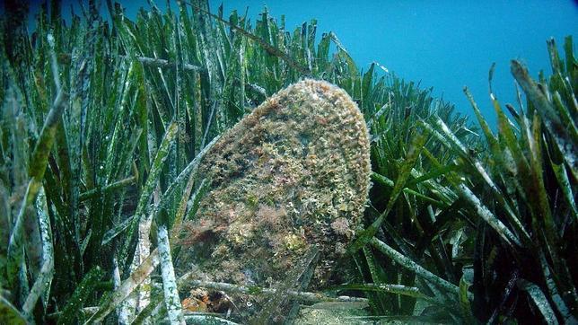 Els aiguamolls i les praderies marines capturen i segresten el carboni entre 10 i 30 vegades millor que un bosc tropical