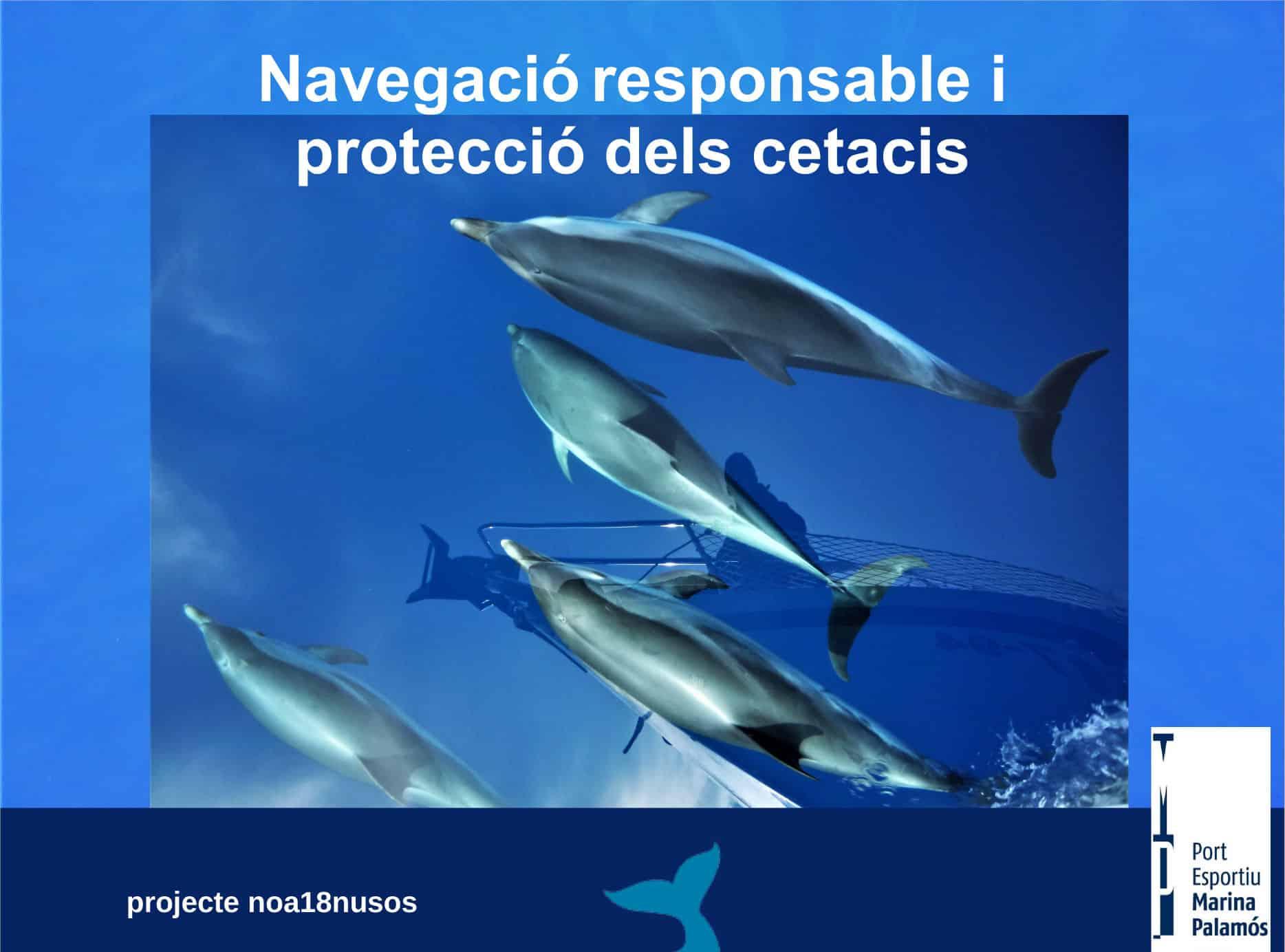 Navegació responsable i protecció de cetacis